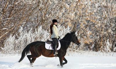 Weihnachtsgedichte für Reiter