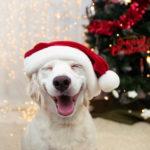 Weihnachtssprüche humorvoll