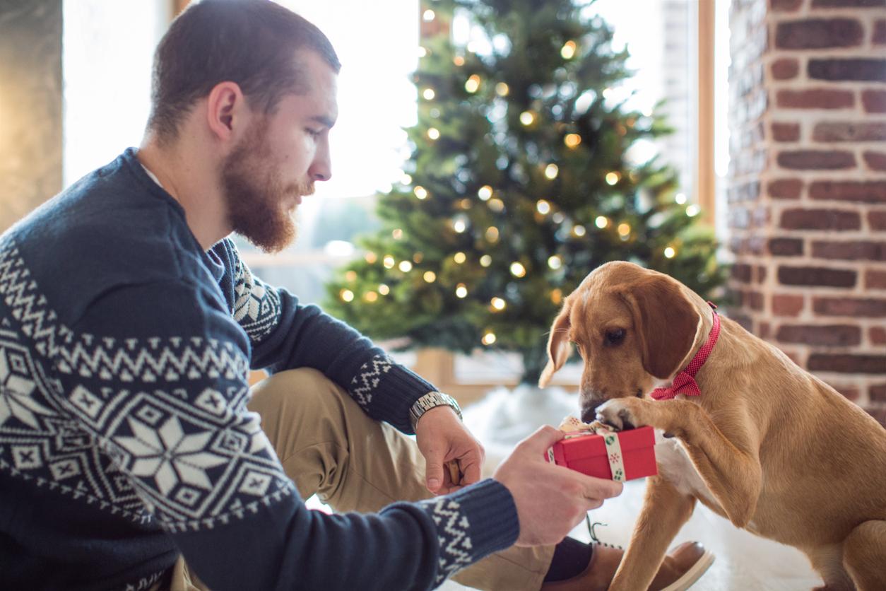 Weihnachtsgrüße für Hundefreunde